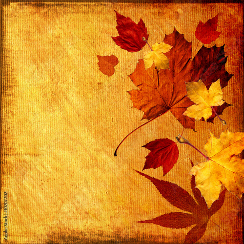 Doppelrollo mit Motiv - autumn background (von bonsy)