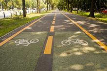 City Bike Lane Along Shady Woo...