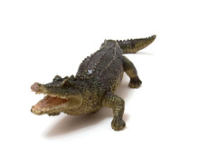 Ceramics Crocodile Isolated On White Background