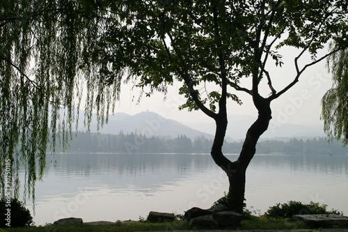 Tuinposter China Chinesischer Baum