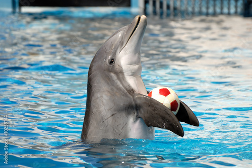 Photo Dolphin playing with a ball