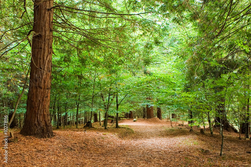 path in the forest Canvas Print