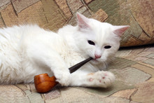 White Cat On Sofa With Tobacco-pipe