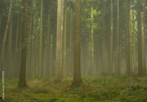 Fotobehang Bossen Wald im Nebel - forest in fog 19