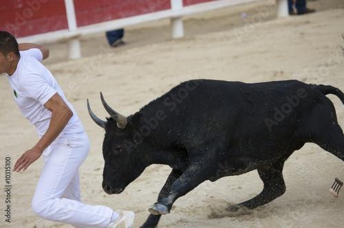 Door stickers Bullfighting Ein einzelner Stier beim Kampf mit Matador in der Arena