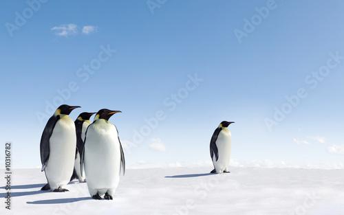 Spoed Fotobehang Pinguin Emperor Penguins in Antarctica