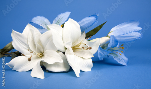 Leinwand Poster white artificial lilly flower on the blue background