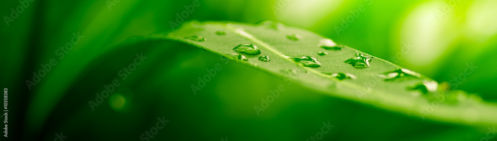 Fototapeta green leaf, nature background
