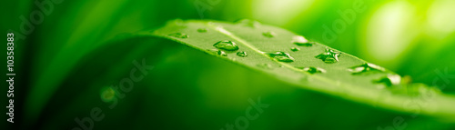 Poster Zen green leaf, nature background