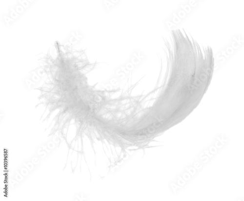 białe piórko kurczaka