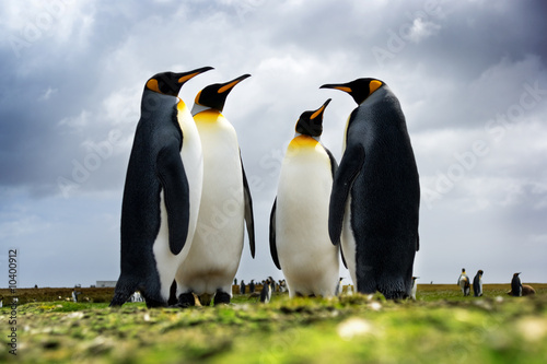 Tuinposter Pinguin 4 King Penguins standing together
