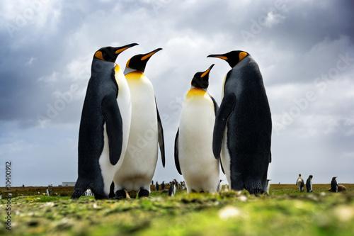 Spoed Fotobehang Pinguin 4 King Penguins standing together