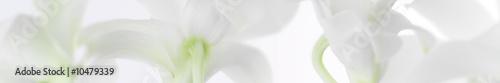 Stickers pour porte Orchidée panorama aus weissen orchideen