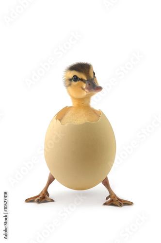 Foto-Schiebevorhang (ohne Schiene) - duck (von brongkie)