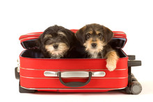 Two Cute Puppies Brothers In T...