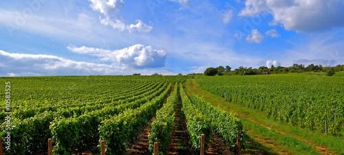 Fotografía  Paysage de vignes.