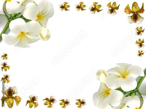 Orchidées Et Frangipaniers En Bordure De Page Buy This
