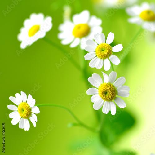 Foto-Banner - sommer, sonne, kleine blümchen