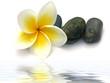 fleur de frangipanier et cailloux