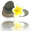 reflet de fleur de frangipanier et de galets sombres