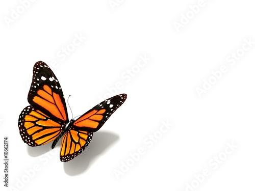 Deurstickers Vlinder butterfly