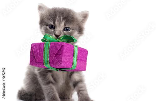 Foto-Schiebevorhang (ohne Schiene) - kitten (von Olga Struk)