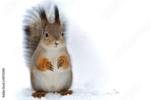 Squirrel A squirrel background.