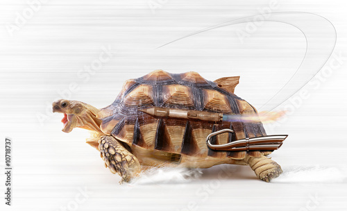 Poster Tortue fast turtle