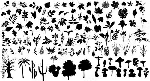 Fototapeta plants obraz