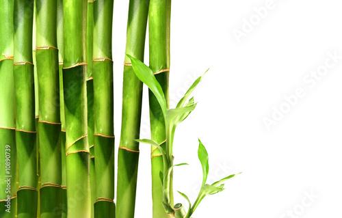 Plakaty Dżungla pedy-bambusa-ulozone-w-rzedzie-na-bialym-tle