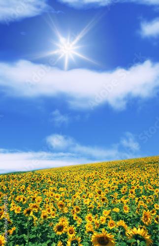 Fotorollo basic - champ de tourne sol (von Y. L. Photographies)