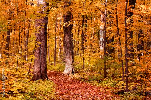Deurstickers Herfst Walk Way Through Colorful Trees