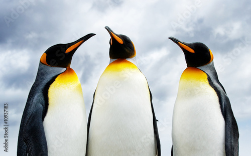 Door stickers Antarctic Three King Penguins