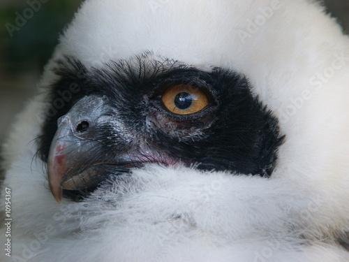 Aluminium Prints Owl Kleine weiße Eule
