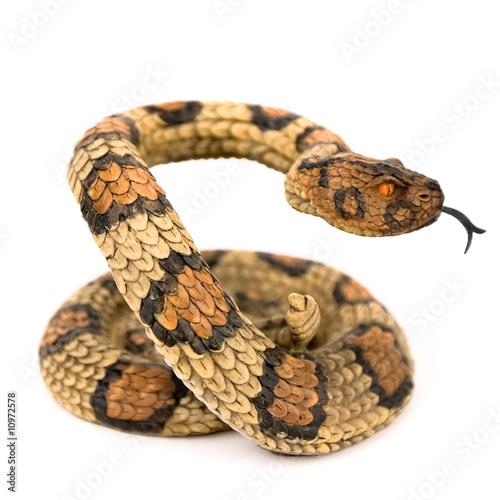 Fotografía  Wooden snake