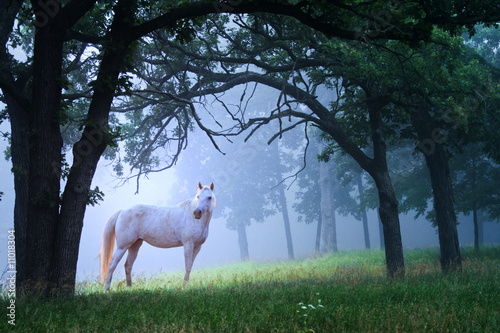 Photo  Horse in Foggy Morning Woods