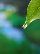 canvas print picture - leaf with dewdrop
