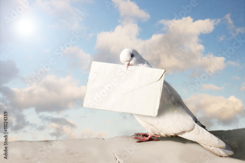 White dove with letter