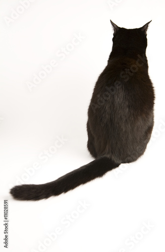 Canvas-taulu A black cat isolated on a white background.