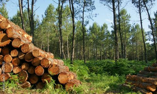 decoupe de bois