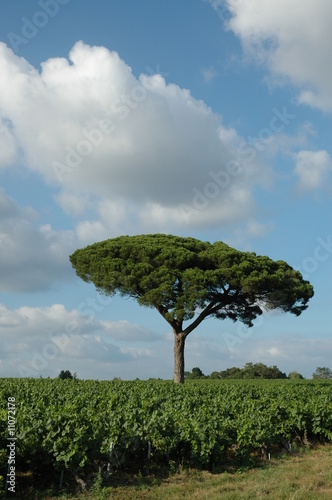 Poster Baobab Arbre isolé
