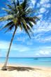 Caribbean Palm