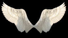 Two Wings Angel Isolated