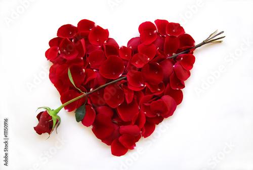 Fotografie, Obraz  Red Valentine Heart Rose with arrow