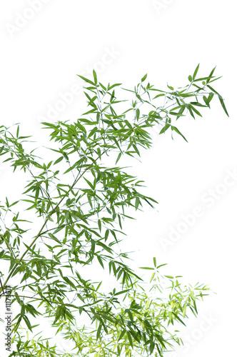 Obraz na płótnie Młody pęd  bambusa na cienkich gałązkach