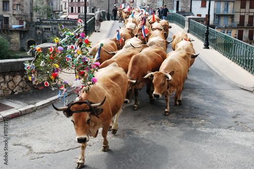 Poster de jardin Vache transhumance