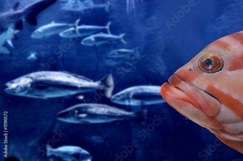 Fotografija  fish