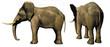 elefante 3d bis