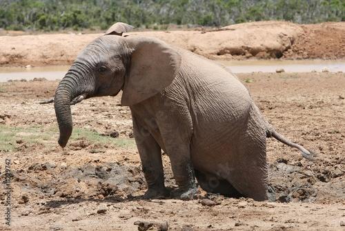 Fotografie, Obraz  Stuck in the Mud