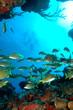 fonds sous-marin6